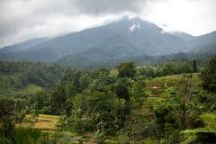 Террасы риса Бали в горах в ненастной погоде Поля риса Jatiluwih Вулкан и держатель Agung среди зеленого риса стоковая фотография