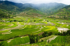 Террасы риса в Вьетнаме Стоковые Фото