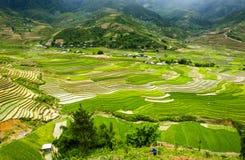 Террасы риса в Вьетнаме Стоковое Изображение