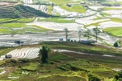 Террасы риса в Вьетнаме Стоковое Фото
