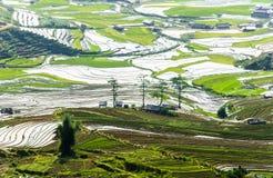 Террасы риса в Вьетнаме Стоковое фото RF
