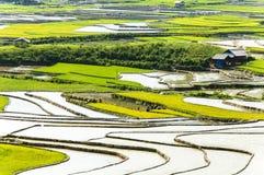 Террасы риса в Вьетнаме Стоковые Изображения RF