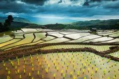 Террасы риса в Таиланде Стоковое Изображение