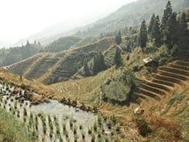 Террасы риса в фарфоре Стоковое Изображение RF
