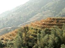 Террасы риса в фарфоре Стоковые Изображения RF