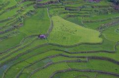 Террасы риса в Banaue Филиппины Стоковое Фото