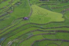 Террасы риса в Banaue Филиппины Стоковое Изображение