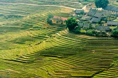 Террасы риса на горе стоковое фото