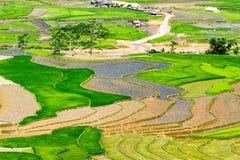 Террасы риса на засаживать сезон Стоковая Фотография