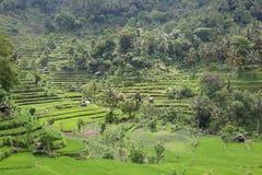 Террасы риса панорамы стоковые фото