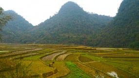 Террасы риса северного Вьетнама Стоковое Изображение