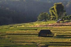 Террасы риса, Чиангмай, Таиланд Стоковая Фотография RF