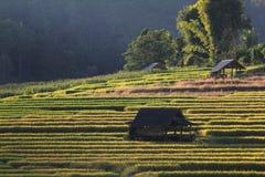 Террасы риса, Чиангмай, Таиланд Стоковая Фотография