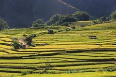 Террасы риса, Чиангмай, Таиланд Стоковое фото RF