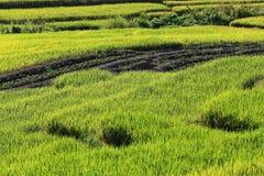 Террасы риса, Чиангмай, Таиланд Стоковое Изображение