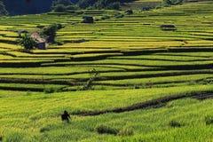 Террасы риса, Чиангмай, Таиланд Стоковые Фотографии RF