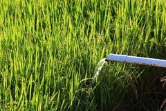 Террасы риса, Чиангмай, Таиланд Стоковые Фото