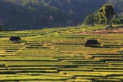 Террасы риса, Чиангмай, Таиланд Стоковые Изображения