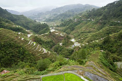 террасы риса Стоковые Фотографии RF