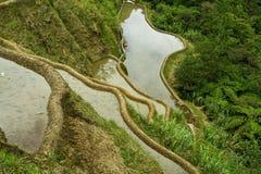 террасы риса Стоковое Фото