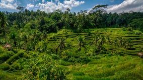 Террасы риса Стоковое Изображение