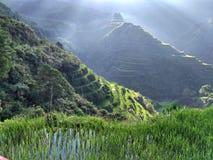 Террасы риса Стоковое Изображение RF