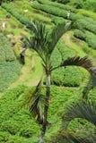 террасы риса bali Индонесии Стоковая Фотография RF