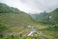 Террасы риса Batad стоковое фото rf