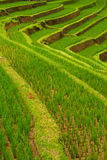 террасы риса jatiluwih bali Стоковые Изображения RF