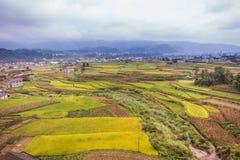 Террасы риса Longji Стоковые Изображения RF
