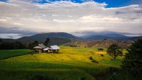 Террасы риса PA Pong Piang стоковое изображение rf