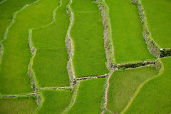 террасы риса philippines banaue Стоковое фото RF