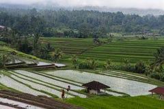 Террасы рисовых полей Стоковое Изображение RF