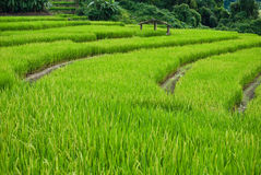 террасы Таиланд риса mea chame Стоковая Фотография RF