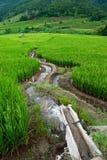террасы Таиланд риса mea chame Стоковые Фото