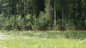 Территория загородного дома Задворк с лугом и загородкой сток-видео