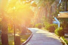 Территория рекреационной зоны лета Бунгало и пальмы стоковые изображения rf