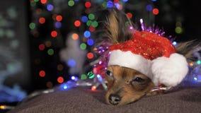 Терьер игрушки желтая собака ` s Нового Года акции видеоматериалы