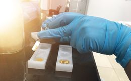Тест нитро фурана антибиотический в наборе теста корма для животных в лаборатории стоковые фото