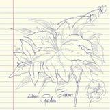Тетрадь установленная с лилиями Стоковое Фото