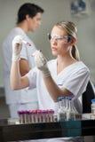 Техник анализируя пробы крови в лаборатории Стоковая Фотография