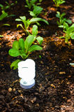 Технология зеленого света Стоковая Фотография