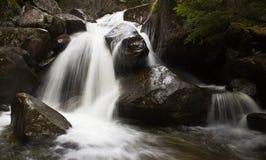 Течение текущей воды в лесе стоковое фото rf