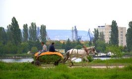 Тележка верховой лошади фермеров Стоковое Изображение RF