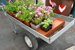 Тележка вполне цветков в магазине или парке сада в горшке заводы для засаживать в открытой земле Стоковые Изображения RF