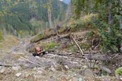 Тележка в лесе Стоковые Изображения