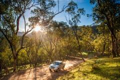 Тележка на дороге леса стоковые изображения