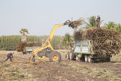Тележка сахарного тростника Стоковые Фото