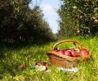 Тележка Яблока Стоковое Изображение RF