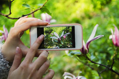 Телефон в руках девушки Стоковая Фотография RF